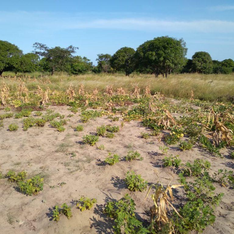 Mozambique – Une agriculture pour la vie